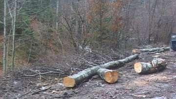 Сеч край Белово създава опасност от наводнение