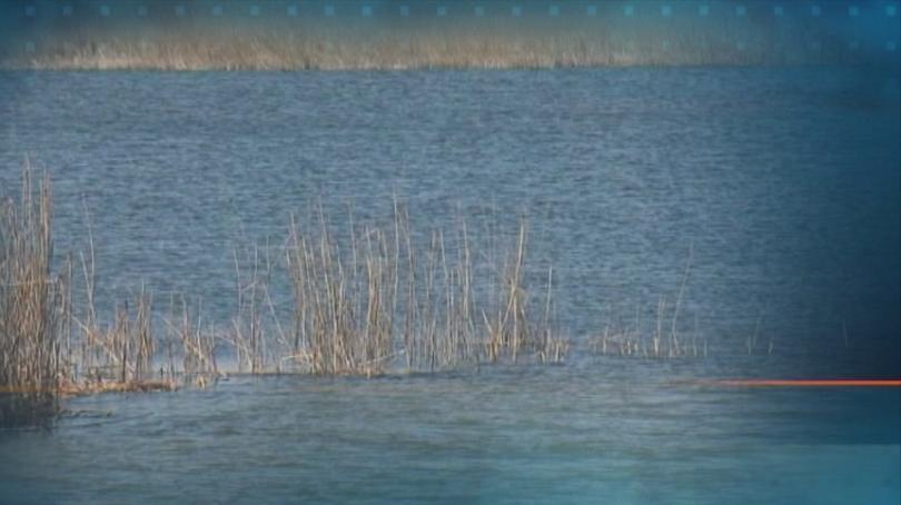 Българското дружество за защита на птиците ще сезира прокуратурата заради