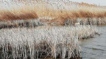 Драстично е спаднало водното ниво на Шабленското и Езерецкото езеро