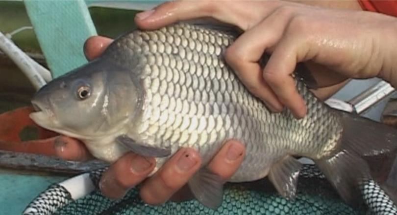 Няма завишение в цените на рибата, уверяват търговци