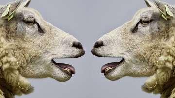 Започна преброяване на селскостопанските животни в България