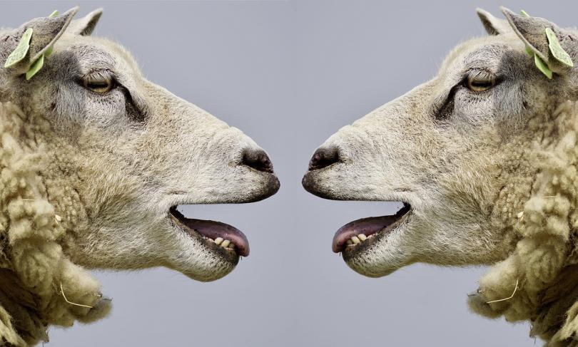 започна преброяване селскостопанските животни българия