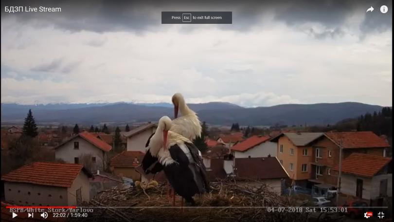 Българското дружество за защита на птиците и тази година наблюдава