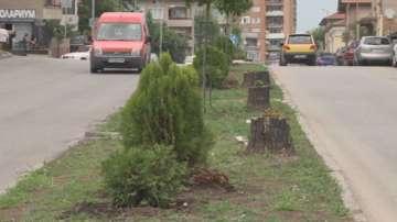 Сеч на здрави дървета в Шумен