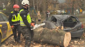 Аварийни екипи отстраняваха щетите от силния южен вятър в София