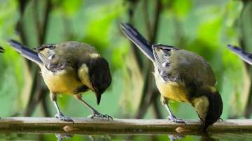 Глобалното затопляне ожесточава междувидовата борба при птиците