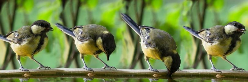 Снимка: Глобалното затопляне ожесточава междувидовата борба при птиците