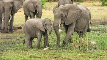 Ботсвана обмисля да разреши отново лова на слонове