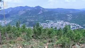 20 години ще отнеме възстановяването на поразените гори в Родопите