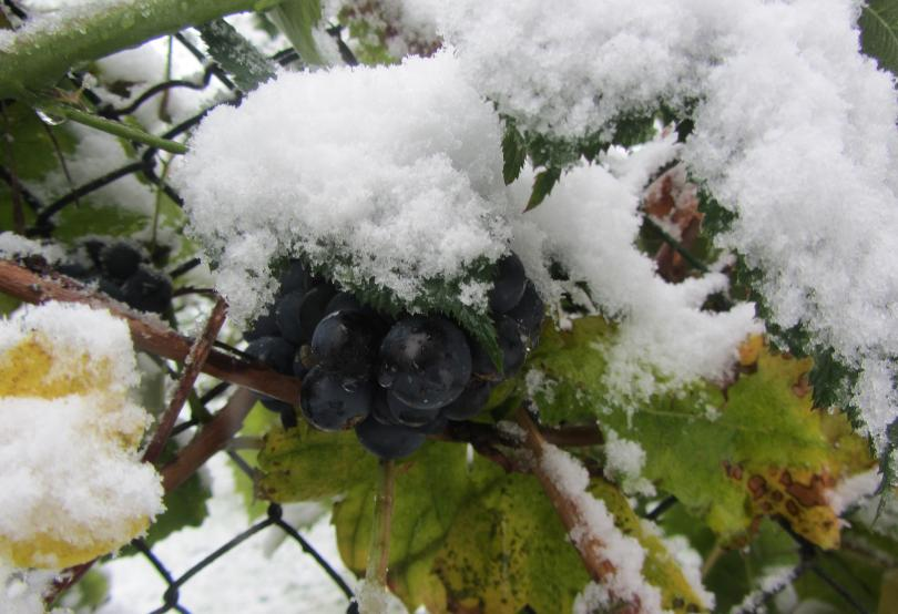 снимка 2 Сняг, дъжд и ниски температури в началото на октомври