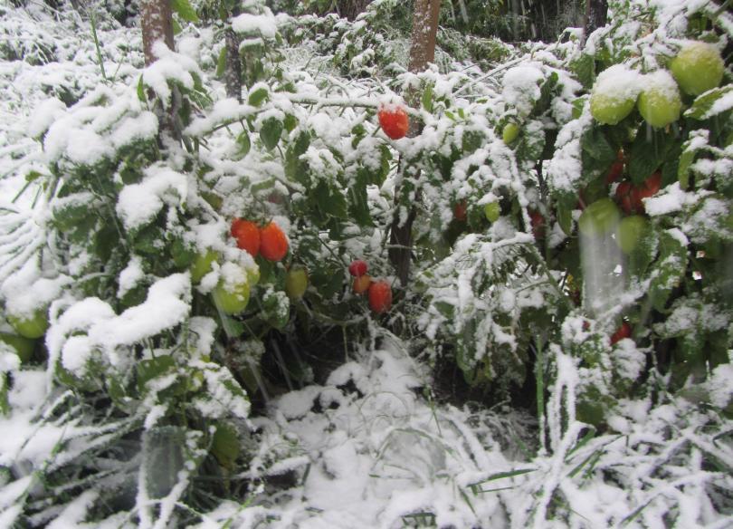 снимка 1 Сняг, дъжд и ниски температури в началото на октомври