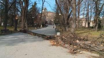Пореден инцидент с паднало дърво в Пловдив
