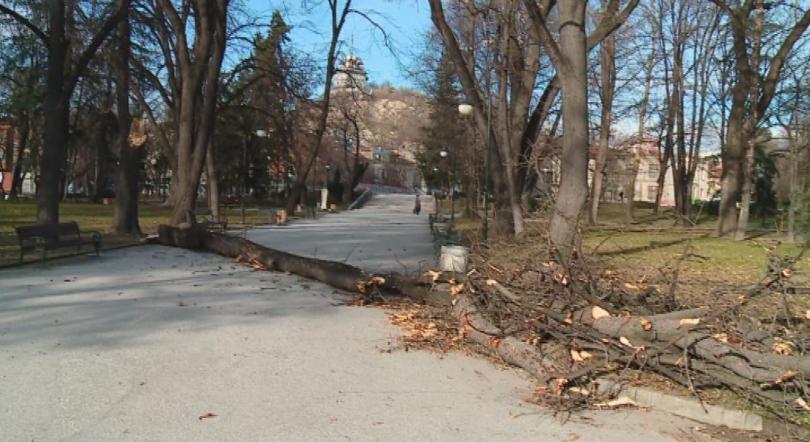 Снимка: Пореден инцидент с паднало дърво в Пловдив