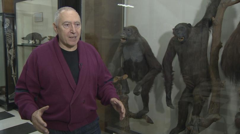 Последният общ прародител на човекоподобните маймуни и човека е ходил