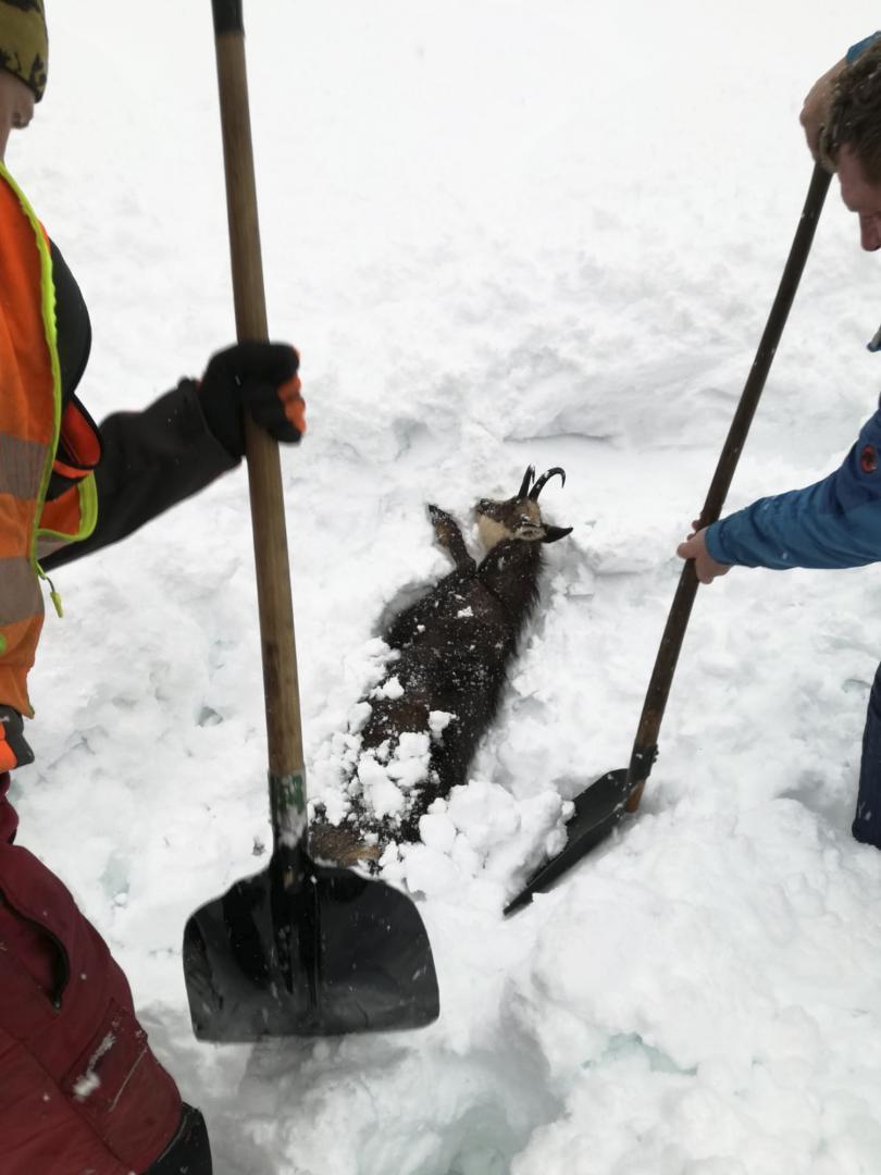 снимка 3 Зимата в Европа: В четири австрийски провинции обявиха висока лавинна опасност