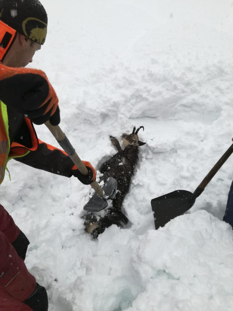 снимка 4 Зимата в Европа: В четири австрийски провинции обявиха висока лавинна опасност