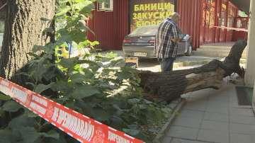 Изгнило дърво падна и рани жена до столичния булевард Дондуков