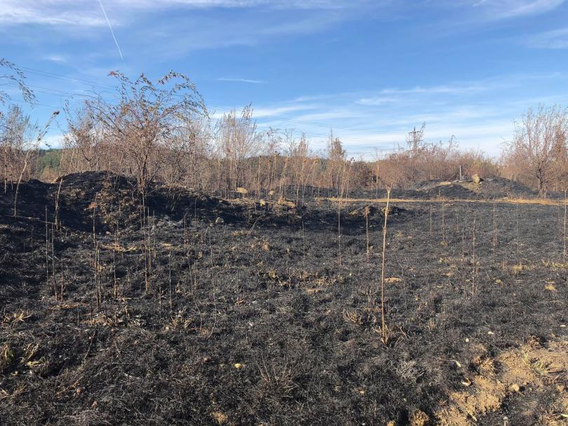 снимка 2 Локализираха пожара в района на Бонсови поляни в Люлин планина
