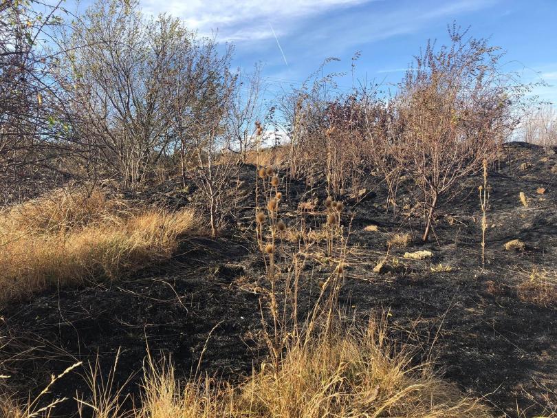 Локализираха пожара в района на Бонсови поляни в Люлин планина