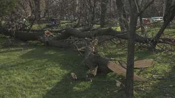 Заради силния вятър в София: 6 аварийни екипа са реагирали на близо 50 сигнала