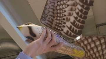 Дрон с формата на сокол гони птиците около летищата