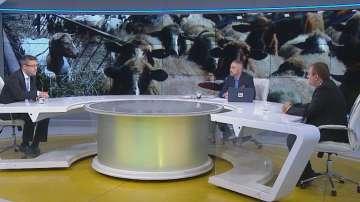 Кой носи отговорност за кризата с животните - спорят депутати от ГЕРБ и БСП