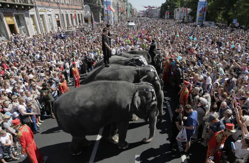 снимка 1 Парад на слонове в Санкт Петербург