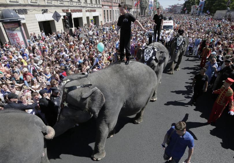 снимка 2 Парад на слонове в Санкт Петербург