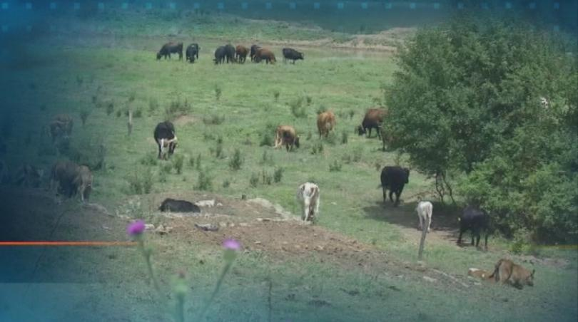 Снимка: Напрежение сред земеделските производители от Странджа и Сакар