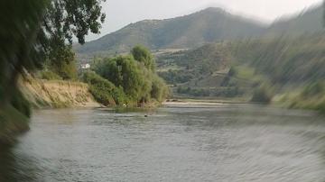 Мъртва риба беше открита на брега на река Струма