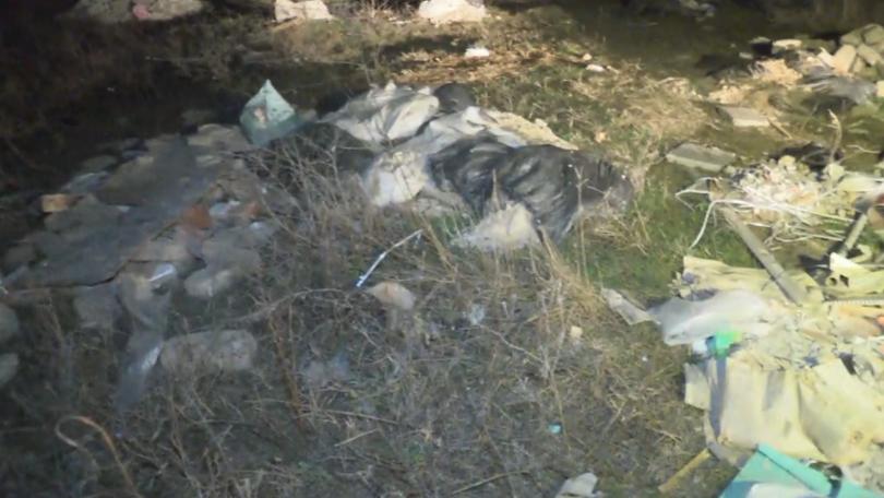 Яма с животински отпадъци бе открита в квартал