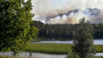 Рекордни жеги в Швеция, горски пожари обхванаха страната