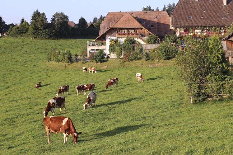 Втори швейцарски кантон забрани носенето на бурка на обществено място.