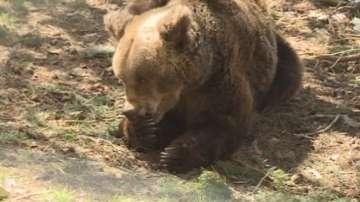 Отварят парка за танцуващи мечки в Белица