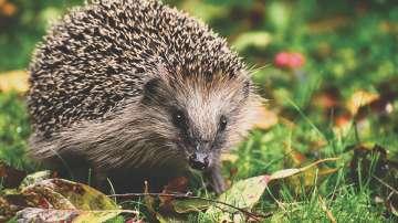 Зрители алармират за убити диви животни на хълм Бунарджика в Пловдив