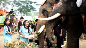 В Тайланд почетоха Деня на слона