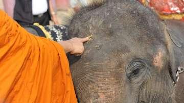 Слон без паспорт (ВИДЕО)