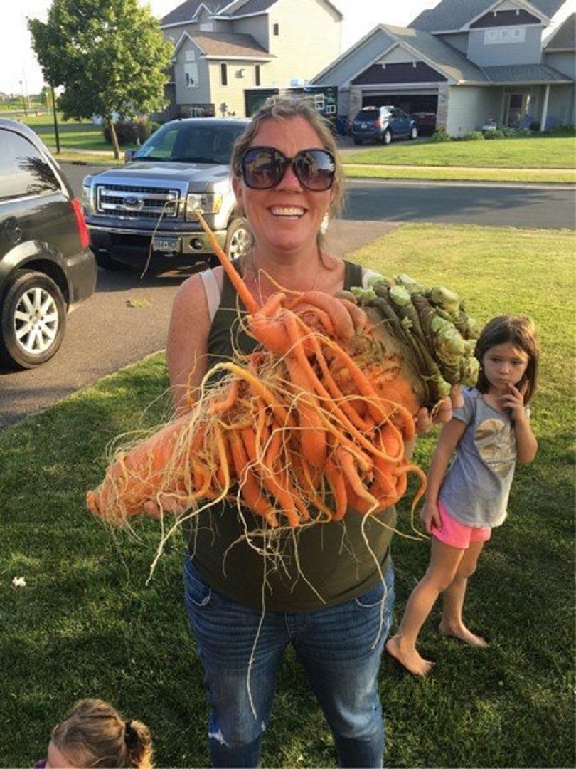 снимка 1 Американски градинар отгледа най-тежкия морков в света