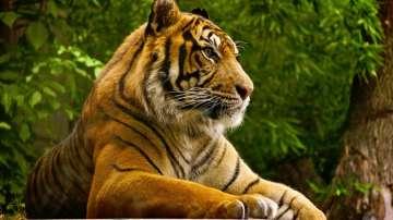 """Тигри отказаха """"Рио Тинто"""" от добив на диаманти в Индия"""