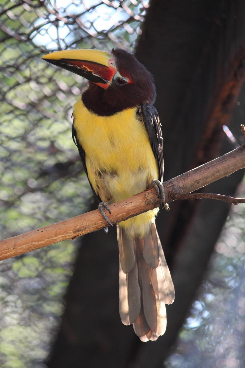 снимка 1 Тукан се излюпи за пръв път в Столичния зоопарк