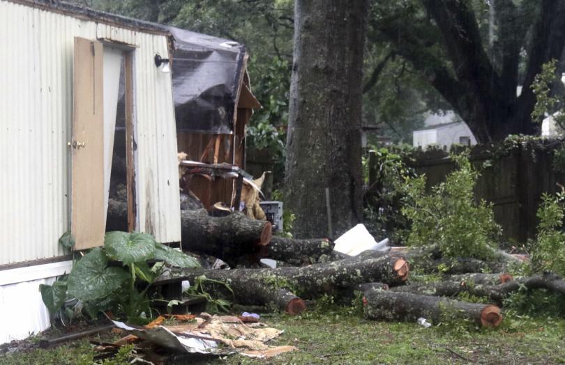 Бебе загина, след като дърво беше изтръгнато от ураганния вятър