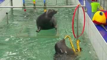 Байкалски тюлени създават изкуство в Иркутск
