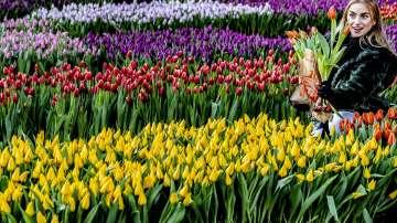 Турция изнася цветя за Холандия по случай Св. Валентин