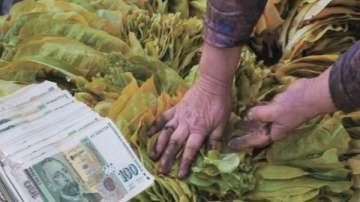 НАП се среща с тютюнопроизводители заради новото данъчно облагане