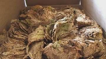 Близо 100 кг тютюн без бандерол са иззети при проверка на лек автомобил