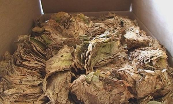 Близо 100 кг тютюн без бандерол са иззети при проверка
