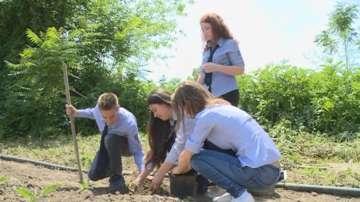 Ученици от Русе разработиха биопестицид, който предпазва пчелите