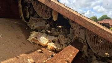 Отстраниханад 100 000 пчели от покрив на болница във Великобритания
