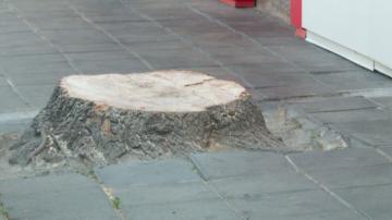 Глобиха собственик на заведение за отрязано дърво