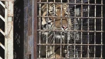 Камион с тигри е блокиран на полско-беларуската граница